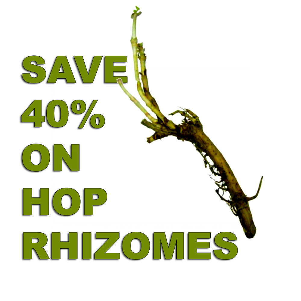 Hop Rhizome Sale - Save 40% at MoreBeer.com Coupon Code